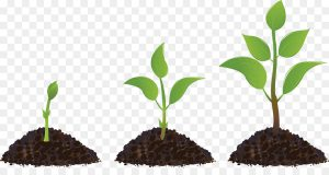 kisspng-seedling-sprouting-drawing-plant-5ad2c01517f715.5144024015237611730982