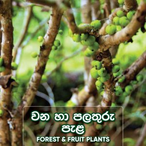 Forest and Fruit Plants