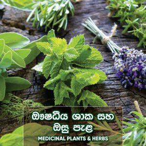 Medicinal Plantsand Herbs [ ඖෂධ පැල ]