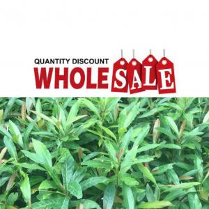 Wholesale - Quantity Discount
